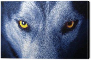Piękne oczy dzikiego wilka.