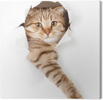 Kot w białym tapety dziury