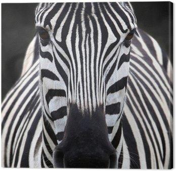 Szef zebra