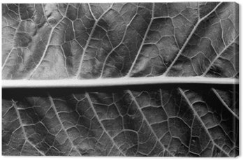 black and white leaf surface.