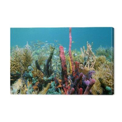 Zdrowe rafa koralowa obfite ryb