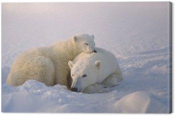 Niedźwiedź polarny z jej cub