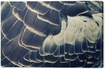 bird's plumage background