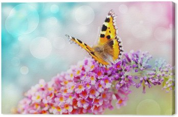 Motyl na kwiat