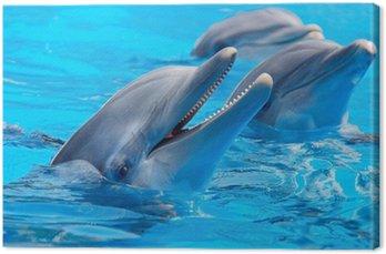 Trzy piękne i zabawne delfiny