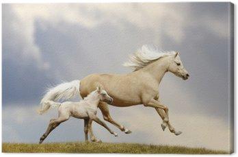 Klacz i źrebię pony