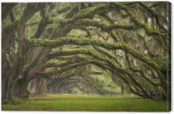 Dęby aleja charleston sc plantacji drzew lasu dębowego na żywo
