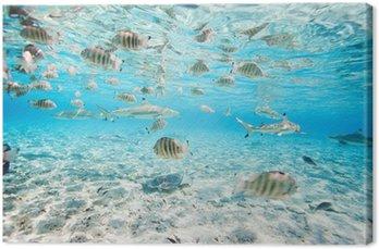 Bora Bora pod wodą