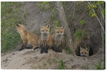Miot Red Foxes