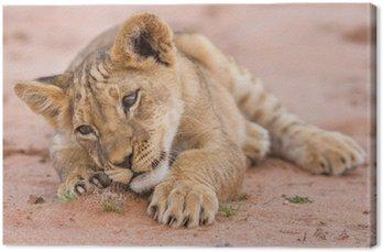 Śliczne lwiątko gra na piasku w Kalahari