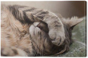 Kot śpi