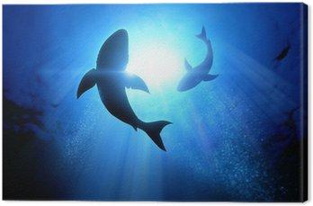 Żarłaczy białych