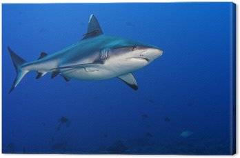 Atak rekina pod wodą