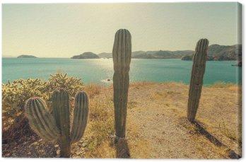 Kaktus w Meksyku