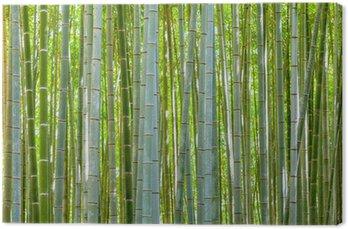 Bambus tła z natury na dzień