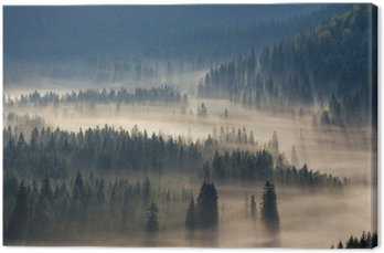 fir trees on a meadow down the will  to coniferous forest in foggy mountains