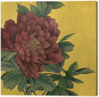 peony flower on a gold background