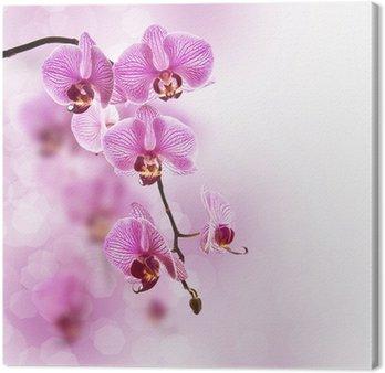 Orchid różowy, pastelowe tło