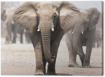 Stado słoni