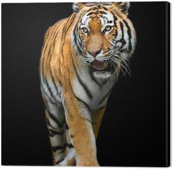 Tiger na czarnym tle