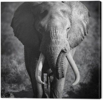 Słoń (przetwarzanie artystyczne)