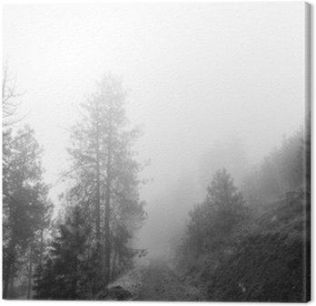 Ścieżka leśnych objętych mgły