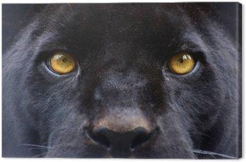 Oczy czarna pantera