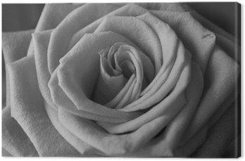 Szczegółowe czarno-biała róża