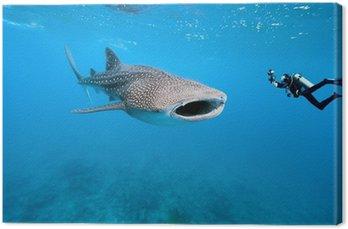 Rekin wielorybi i podwodnego fotografa