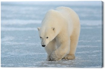 Polar Bear spaceru na niebieskim lodem.