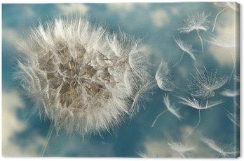 Dmuchawiec utraty nasion na wietrze
