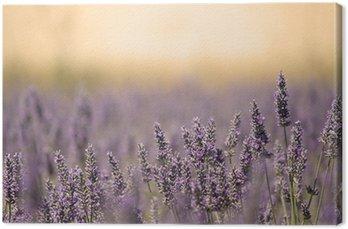 Łąka lato z kwiatem. lawendy.