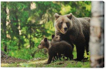 Brązowy niedźwiedź w lesie rodzina