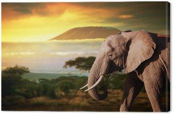 Słoń na sawannie. Kilimandżaro na zachodzie słońca. Safari
