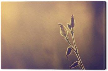 Spring / summer flowers