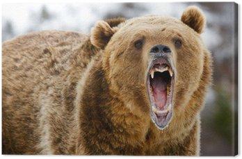 Warczenie Grizzly Bear