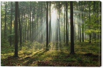 Rano w lesie