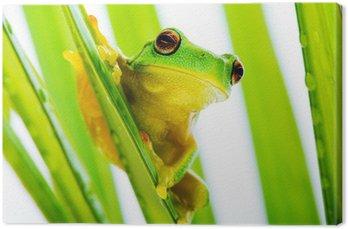 Mała zielona żaba drzewo na gospodarstwo drzewa palmowego