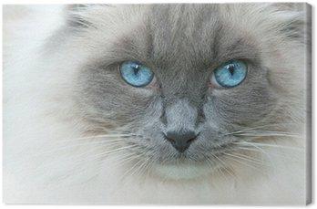 Kot o imieniu Elvis