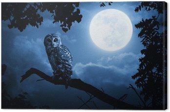 Owl Oświetlone Przez pełni księżyca w noc Halloween