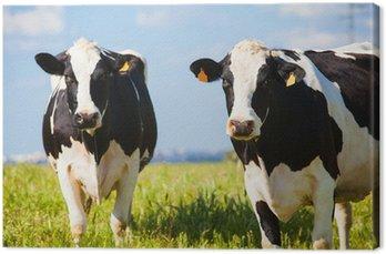 Krowy na wsi na wiosnę