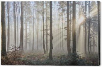 Sun promienie przez mglisty las