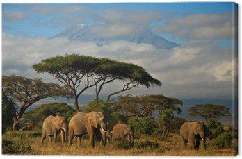 Słoń rodziny przed mt. Kilimandżaro