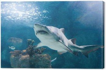 Rekin zabójca