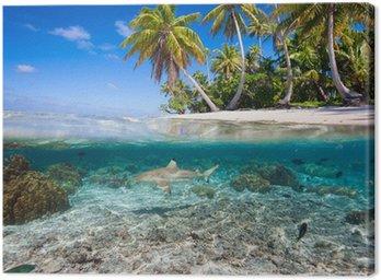 Tropikalna wyspa pod i nad wodą