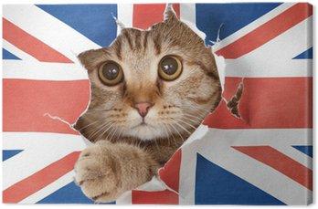 Brytyjski kot patrząc przez otwór w papieru flaga Wielkiej Brytanii