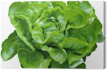 Zielona sałatka z naszych ogrodach