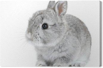 Szary dziecko królik na białym tle
