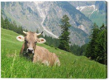Kuh im Oytal
