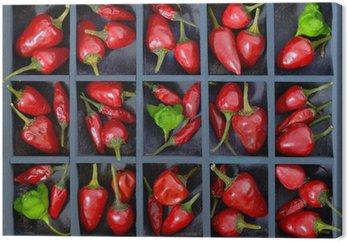 Czerwone papryki chili